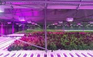 LumiGrow为生菜基础温室提供LED灯具白银